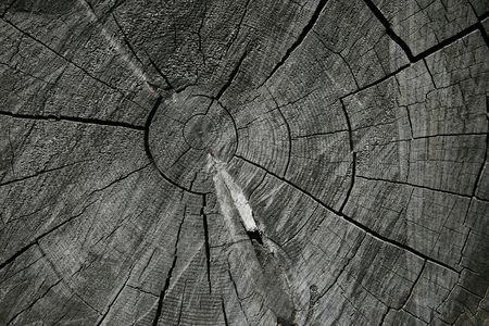 growth rings on the end of a gray sawn log Stock Photo - 3634174