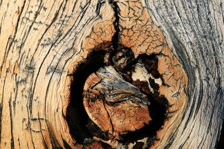 treetrunk: weathered pine tree trunk knothole background Stock Photo