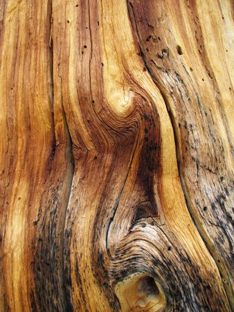 treetrunk: twisted knotted pine trunk wood grain Stock Photo