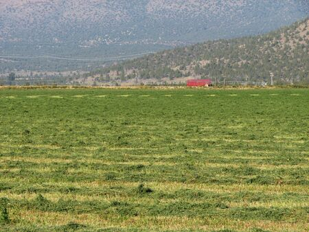 a freshly mown hay field with red barn in the distance Stock Photo - 3659517