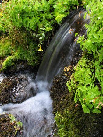 water uit een bron lozingen via een kleine waterval en mossen