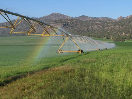 irrigated: green hay field irrigated by circular spray irrigation system Stock Photo