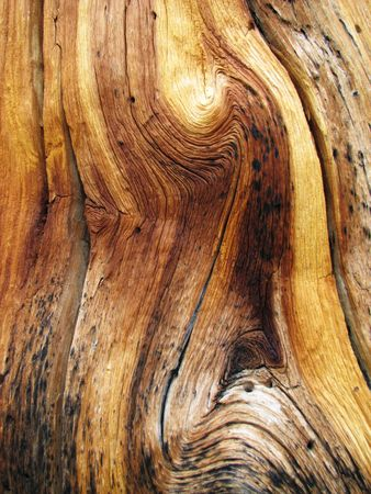 knotted dead pine tree trunk showing wavy wood grain