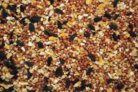 corn flower: background of mixed bird seed Stock Photo