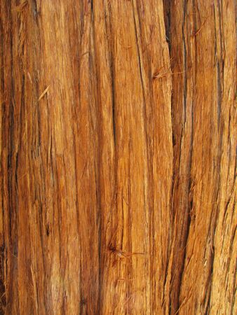 red cedar trunk with bark suitable for background use