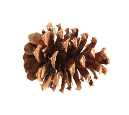 ponderosa: ponderosa (Pinus ponderosa) pine cone isolated on white
