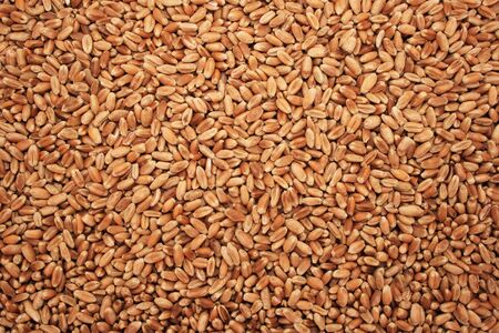 background of dry wheat berries Stock Photo - 3691501