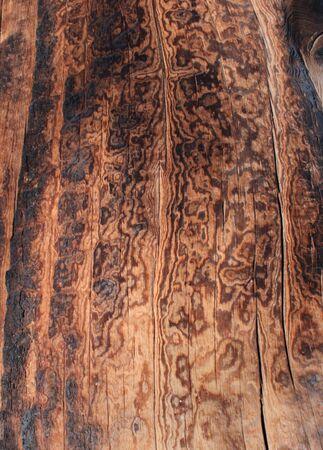 treetrunk: burned pine wood background texture Stock Photo