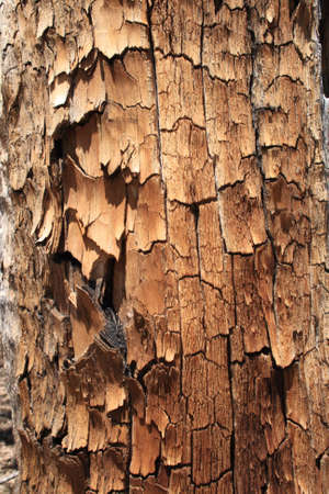 flaking splitting dead pine trunk background texture Stock Photo