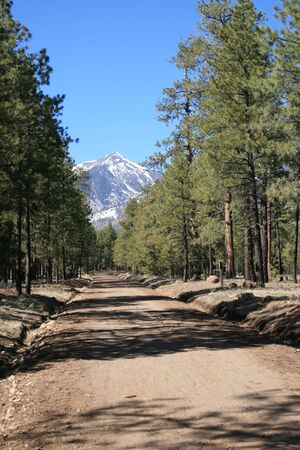 a dirt and gravel road heads through the trees towards a mountain peak Stock Photo - 3747869