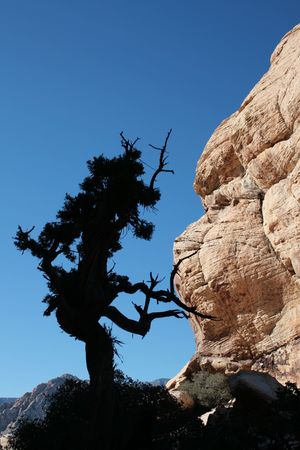vertical image of silhouette of gnarled tree in a sandstone desert canyon Stock Photo - 3747706