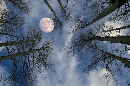 view up at a nearly full moon behind bare tree branches against a blue sky photo