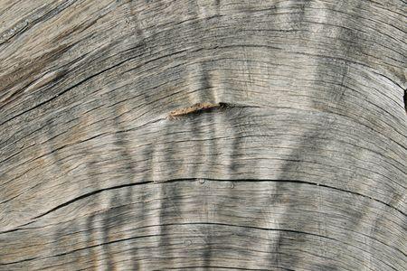 treetrunk: weathered gray woodgrain background texture