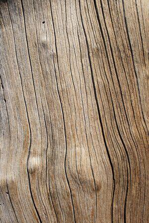 cracking pine log wood background texture Stock Photo - 3863978