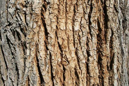 horizontal image of the bark on an old cottonwood (populus fremontii) tree trunk Stock Photo - 3864032