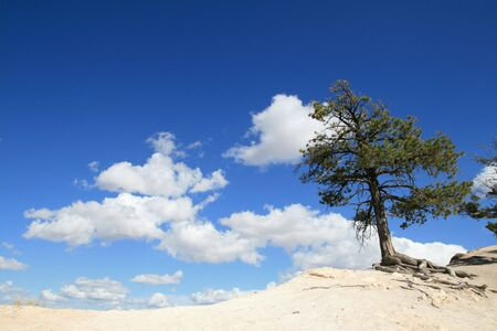 pine tree on the edge of the world with blue sky and clouds in the background Stock Photo - 3878715
