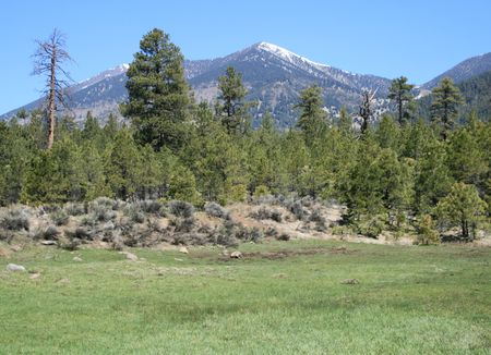 a green grass meadow and the San Francisco Peaks with Ponderosa Pines Stock Photo - 3891172