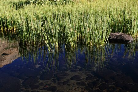 clear mountain pool with green reeds and reflection Stock Photo - 4088245