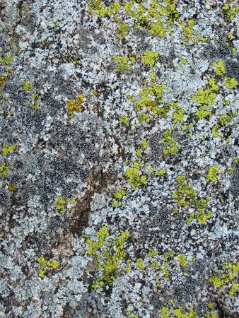 weathered granite covered with yellow, brown, and bluish lichen Stock Photo - 4152793