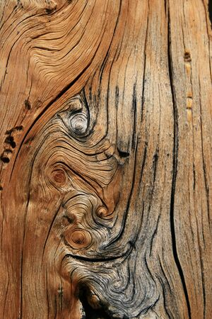 knotted splitting pine trunk background texture