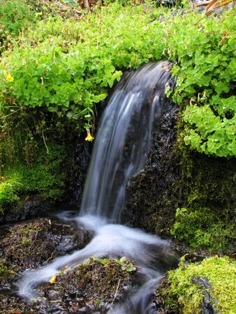 water from a spring spills over a small waterfall and mosses in a long exposure with silky water Stock Photo