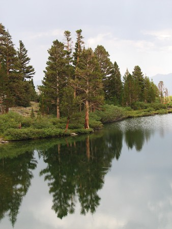 pine trees and their reflection in Gilbert Lake, Sierra Nevada, California Stock Photo - 4333021
