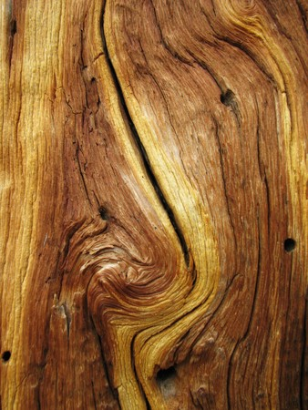 sandblasted: knotted dead pine tree trunk showing curved wood grain