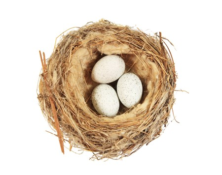 bird nest with three speckled eggs isolated on white photo