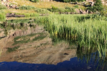 clear mountain pond with green reeds and mountain reflection Stock Photo - 4422977