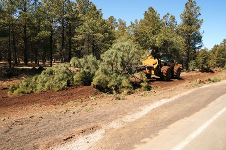 widening: a wheeled skidder drags a pine tree along the side of a road