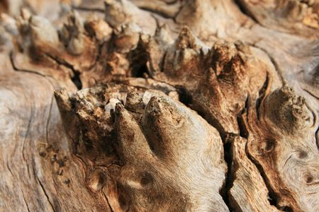 cracked cottonwood wood trunk grain with spikes Stock Photo - 5077913