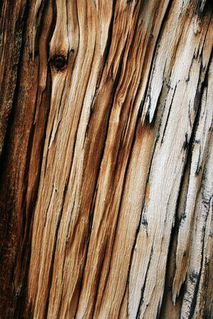 splintered: splintered gray wood background from pine trunk Stock Photo