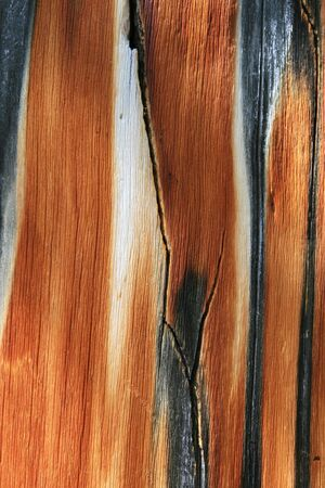 weathered pine trunk wood background texture Stock Photo - 5316826