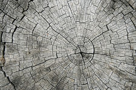 growth rings and radial splits on the end of a sawn log