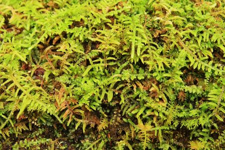 close up green moss detail for background use Stock Photo - 5772121