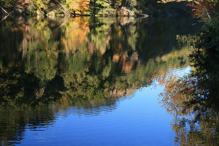reflection of early fall trees in a lake with circular ripples  Stock Photo - 5863905