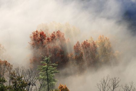autumn tree tops from above shrouded in fog with early morning light casting shadows Stock Photo - 5944578