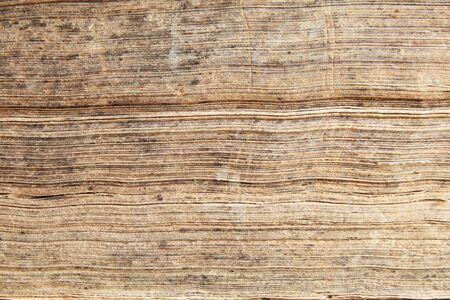 the worn edges of the pages of an old antique book