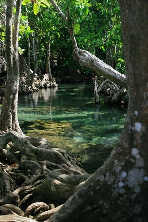 tat: exposed roots at Tha Pom Khlong Song Nam and a clear blue stream