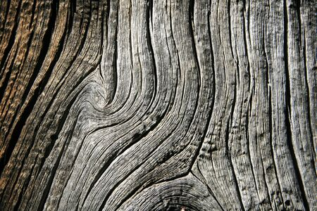 gray weathered pine wood on dead pine trunk Stock Photo - 6881825
