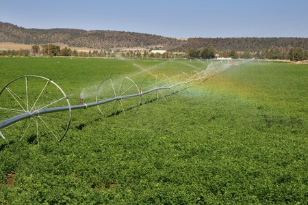 wheel line irrigation system in a Central Oregon alfalfa field
