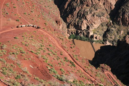 south kaibab trail: a Grand Canyon mule train on the lower South Kaibab Trail