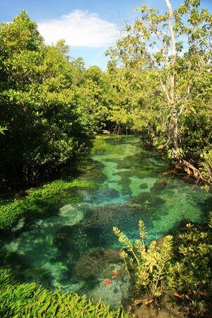 clear tropical stream at Tha Pom, Krabi, Thailand Stock Photo - 7113371