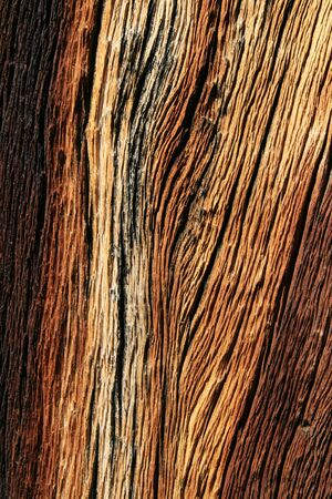 weathered pine wood on a pine tree trunk in the mountains Stock Photo - 7233739