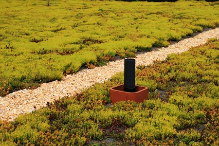 green building roof covered with flowering sedum plants