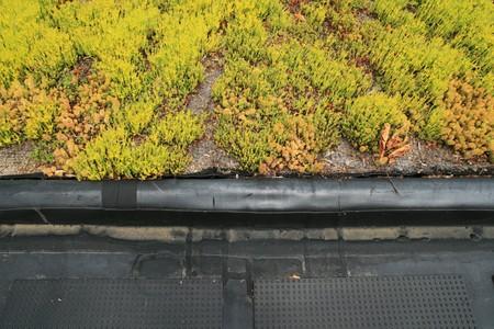 partielle Dachbegrünung Top Detail zeigt die Grenze