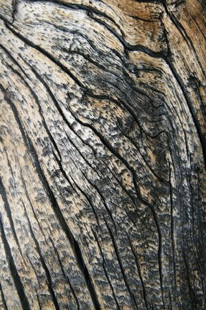 cracked wavy wood grain from an old pine tree trunk photo