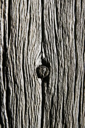 worn gray dead tree trunk with knot Stock Photo - 7912719