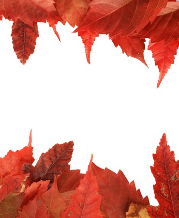 red fall leaf border along the top and bottom of a white background Stock Photo - 8039939