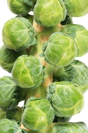 stalk of brussel sprouts on white background